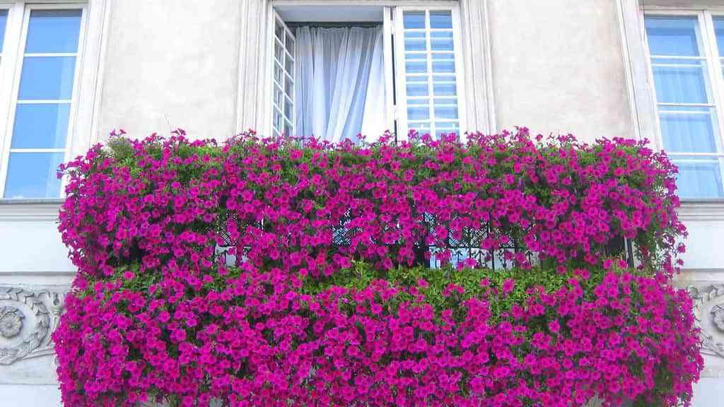 Ideas para decorar una terraza o balcón con plantas y flores