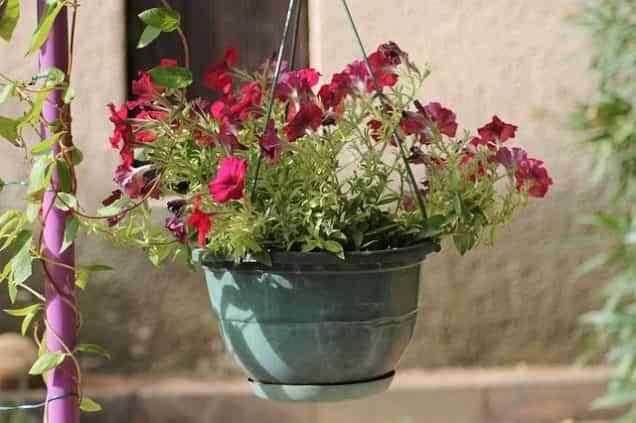 Ideas para decorar una terraza o balcón con plantas y flores 6