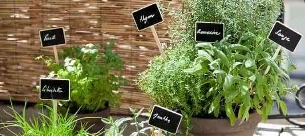 Ideas para decorar una terraza o balcón con plantas y flores 7