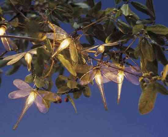 libelulas-luminosas2