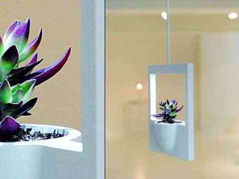marco planta polaroid