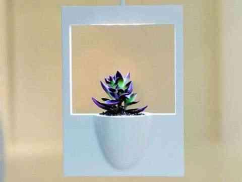 marco planta polaroid2