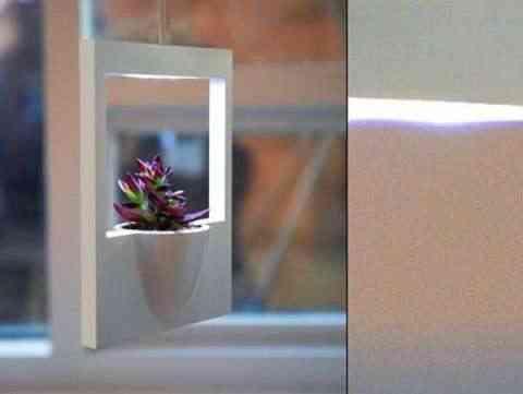 marco planta polaroid3