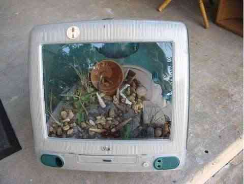 ordenador terrario6