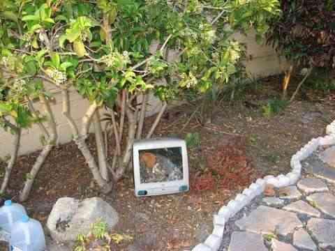 ordenador terrario8